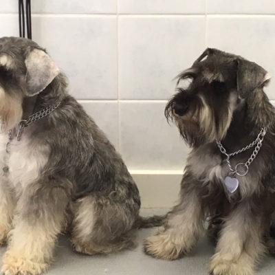 Chi siamo toelettatura ancona cani gatti taglio a for Esposizioni bagni
